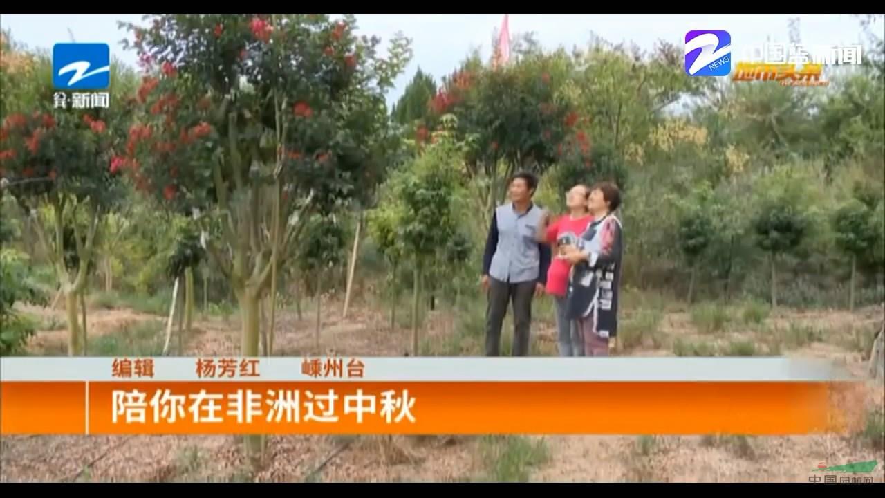 苗场火箭红紫薇在浙江卫视播出